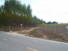 Land for sale in Nongpalai showing the road frontage