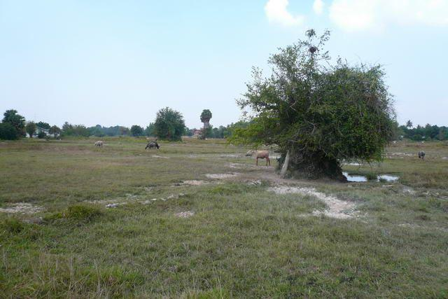 Land for sale in Na Jomtien ideal for houses